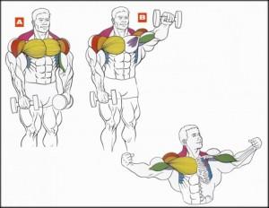 Самые эффективные упражнения на плечи