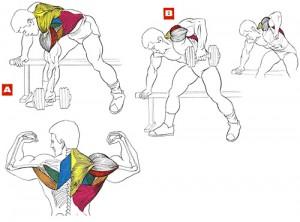 Эффективные упражнения для спины