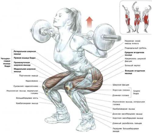 Самые эффективные упражнения со штангой