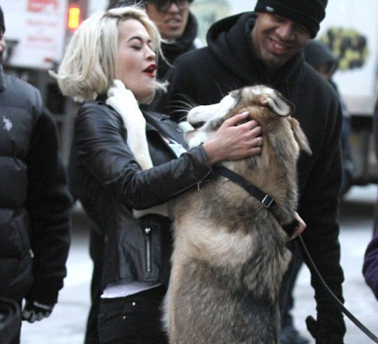 Рита Ора любит собак!